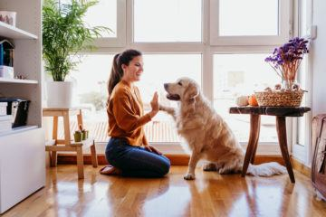 pet-friendly private rental sector