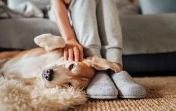 The rising popularity of pet-friendly lets and where to find them