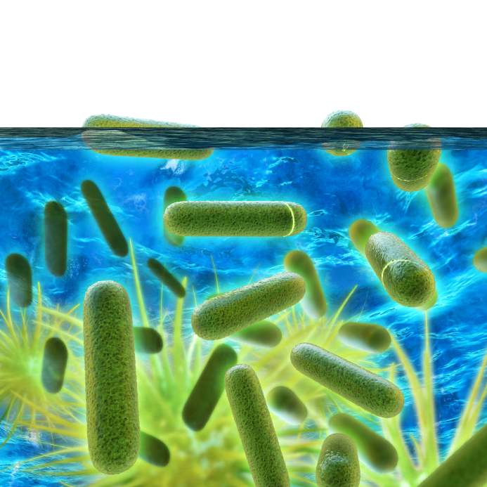 What landlords must do to prevent legionella landlord news - Legionnaires disease swimming pool ...